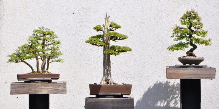 Moja stranka je kot bonsai